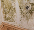 Identifying home mold sources